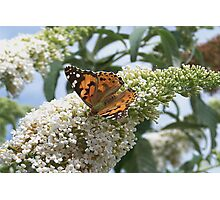 A lone Butterfly Photographic Print
