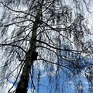 Weeping Willow by gothgirl