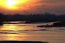 Crane Sunset by Dawne Olson