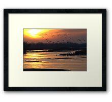Crane Sunset Framed Print