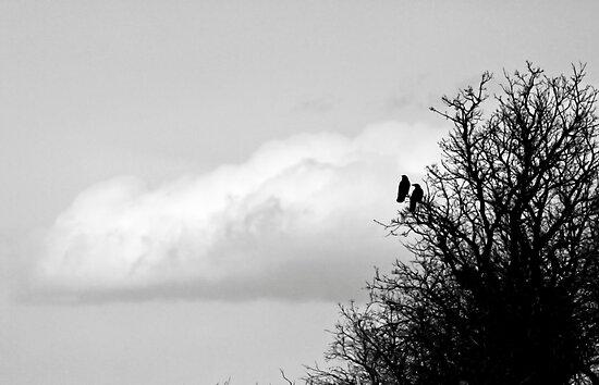 Ravens by MarcVDS