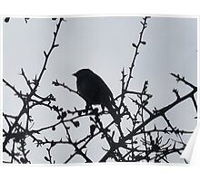 Silhouette of Sparrow Poster