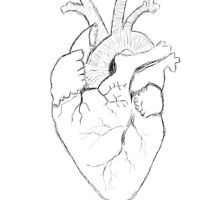 Anatomical Heart Sketch by TheTomlinsons