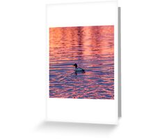Sunrise With A Canvasback Duck Greeting Card