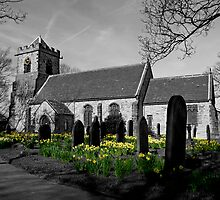 Hopton Daffs by sbpphotography