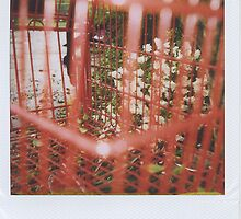 Red Buggy Polaroid by kaylarenee