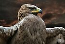 Tawny Eagle by Yampimon