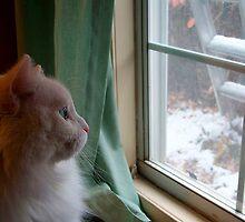 Window Gazing by Sunshine417