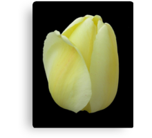 Yellow Tulip Against Black Canvas Print