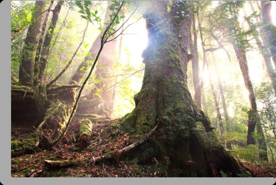 Enchanted Forest, Franklin-Gordon Wild Rivers National Park, Tasmania  by Michael Boniwell