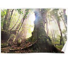 Enchanted Forest, Franklin-Gordon Wild Rivers National Park, Tasmania  Poster