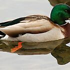 The Mallard by Scott Englund