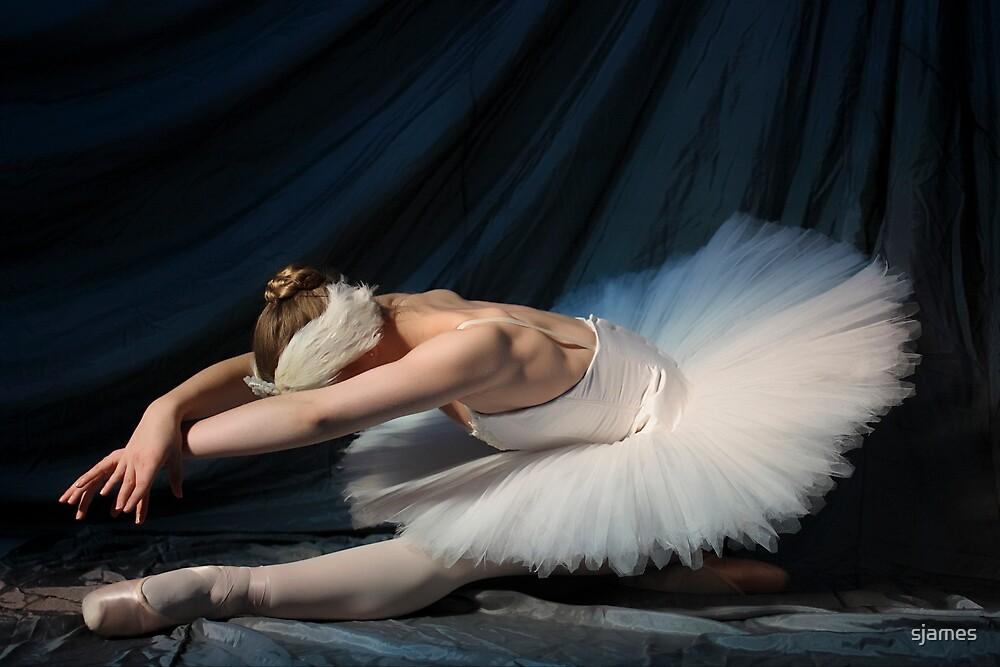 Swan by moonlight by sjames