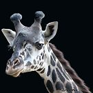 Giraffe by Jenifer