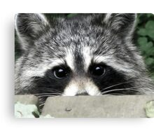 Shyly Hoping Canvas Print
