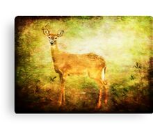 The Freeloader Canvas Print