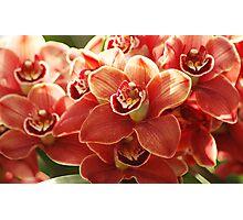Orange Orchids Photographic Print