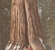 Standing in the Redwood Tree(Yosemite Natl. Park, CA) by Dennis Knecht