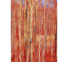 Abstract Birch Trees Photographic Print