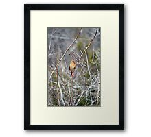 Four Calling Birds - minus Three Framed Print