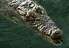African Crocodile by Carole-Anne