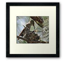 the hummingbird family of Zip 1 Framed Print
