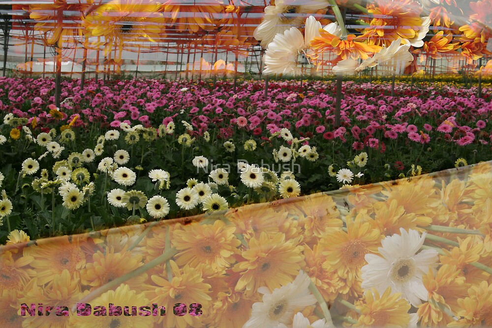 A Package of Gerberas is for  YOU ! ~ ! by Nira Dabush