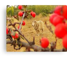 spike with red berries Canvas Print