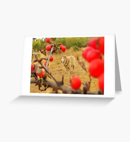 spike with red berries Greeting Card