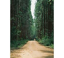 The road through the forest Photographic Print