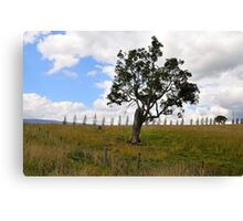 Dont Fence Me In - Little Hartley , Blue Mountains , NSW Australia Canvas Print