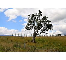 Dont Fence Me In - Little Hartley , Blue Mountains , NSW Australia Photographic Print