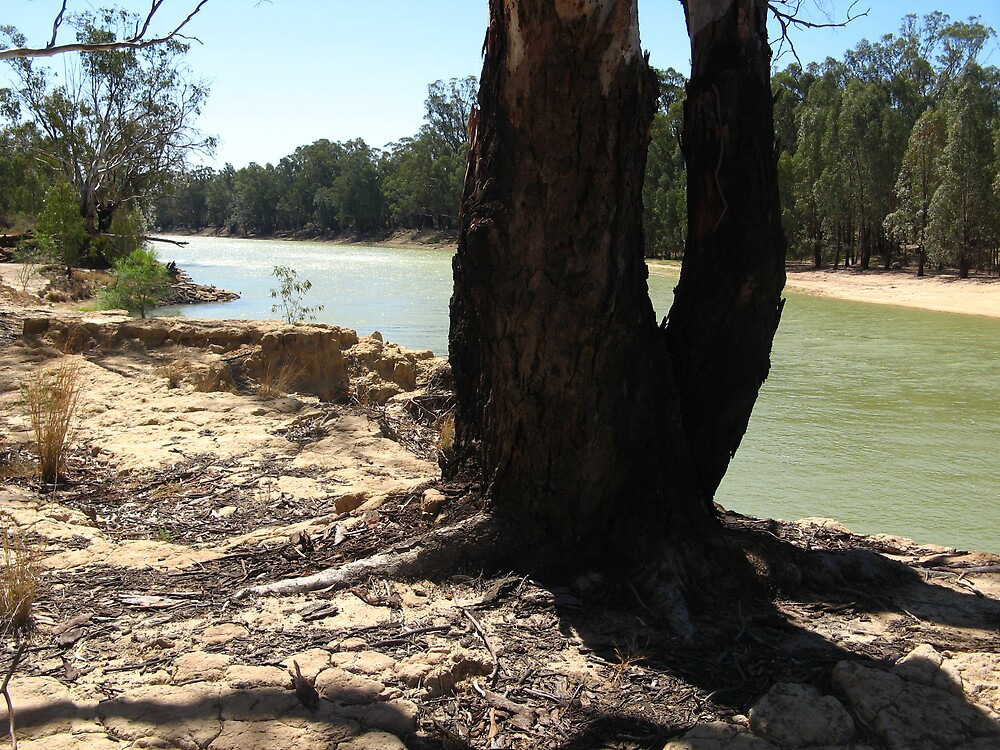 Murray river by jayview