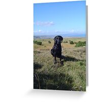 labradors for dog lovers Greeting Card