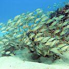 fish by Paola  Massa