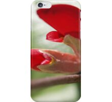 Gastrolobium celsianum iPhone Case/Skin