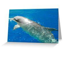 Gods beautiful creatures Greeting Card