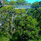 The Tree Top Walk by Penny Smith