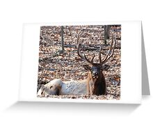 Lone Elk new edition for over 60 group Greeting Card