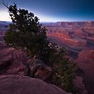 Dead Horse Point  by Nick Johnson