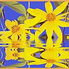 Flowers in Water by jhell2