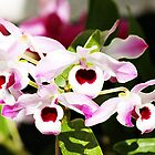 Baby Orchids by Kathleen Struckle