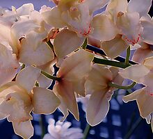Delicate Orchids by Kathleen Struckle