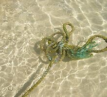 Boat Rope - Coral Bay by eramophla