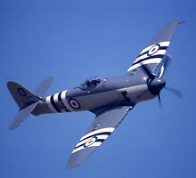 Sea Fury @ Brisbane Airshow, Queensland, Australia 2003 by muz2142