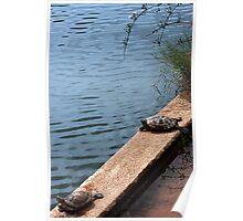 Sunbathing Turtles Poster