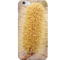 Banksia iPhone Case/Skin