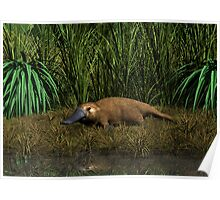 Platypus Creek Poster