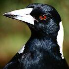 Murderous Magpie by Erland Howden
