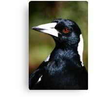 Murderous Magpie Canvas Print